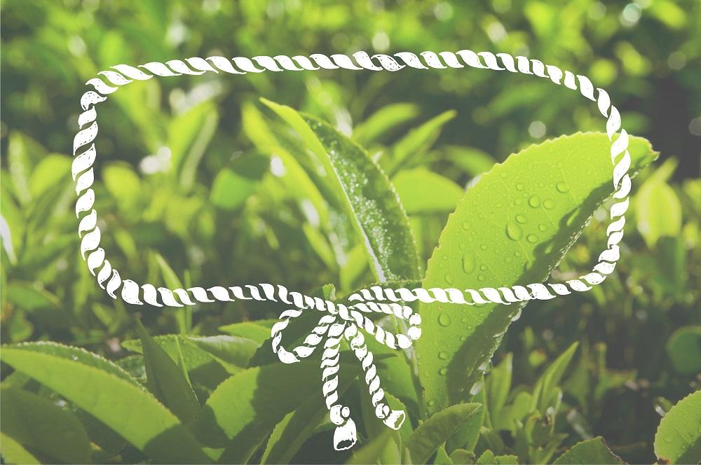 Plantation Green Environment Conservation Frame Concept